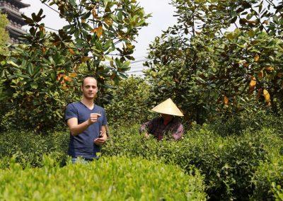 João, fundador da Chá Yê!, na colheita do chá verde Bambu Roxo em Zhejiang