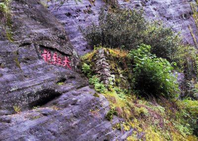 Arbustos mãe do chá oolong Da Hong Pao em Wu Yi Shan, Fujian