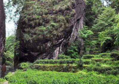 Plantação de chá em Wuyi Shan, Fujian