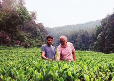 Jardim de chás em Wuyi Shan