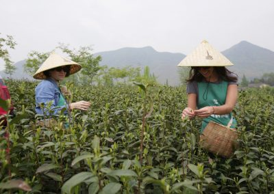 Colheita de chá em Mogan Shan
