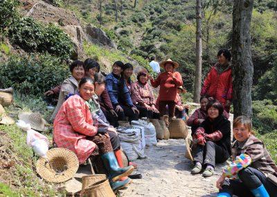 Subida em busca do arbusto mãe do Anji Bai Cha